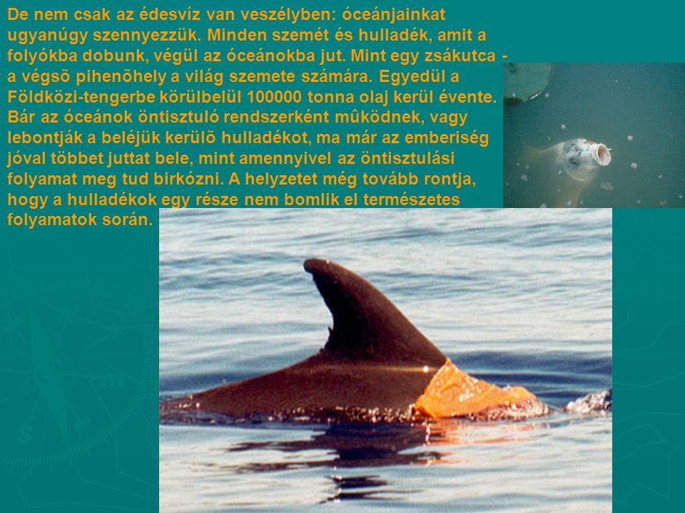 De nem csak az édesvíz van veszélyben: óceánjainkat ugyanúgy szennyezzük.