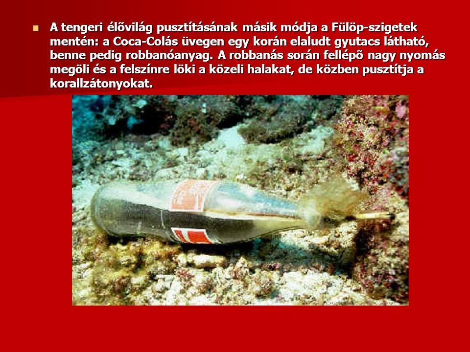 A tengeri élõvilág pusztításának másik módja a Fülöp-szigetek mentén: a Coca-Colás üvegen egy korán elaludt gyutacs látható, benne pedig robbanóanyag.