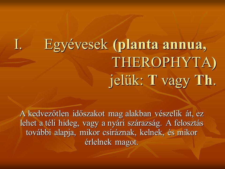 Egyévesek (planta annua, THEROPHYTA) jelük: T vagy Th.