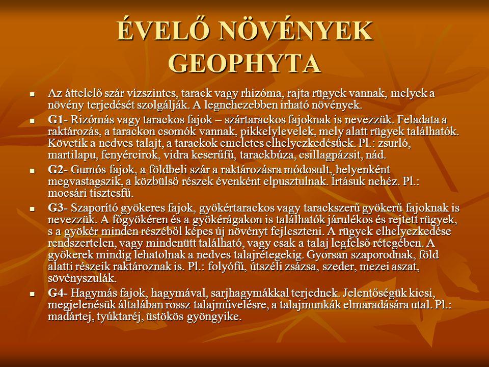 ÉVELŐ NÖVÉNYEK GEOPHYTA