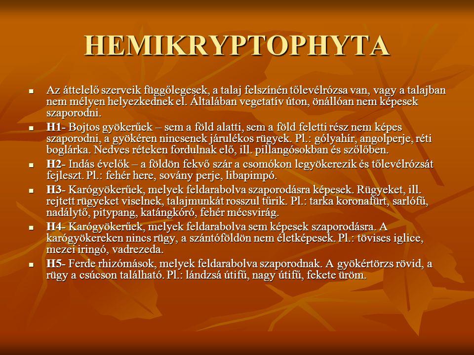 HEMIKRYPTOPHYTA