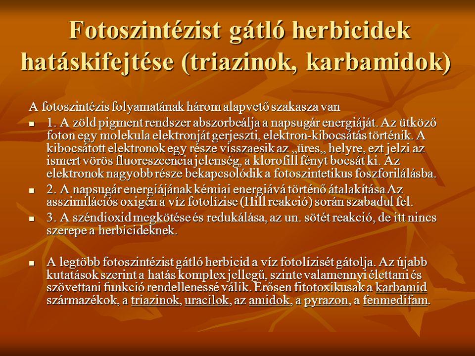 Fotoszintézist gátló herbicidek hatáskifejtése (triazinok, karbamidok)