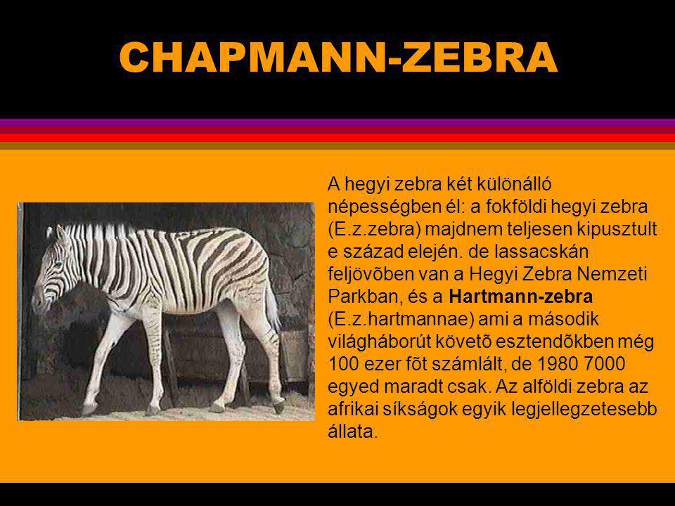 CHAPMANN-ZEBRA .