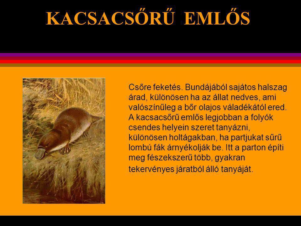 KACSACSŐRŰ EMLŐS