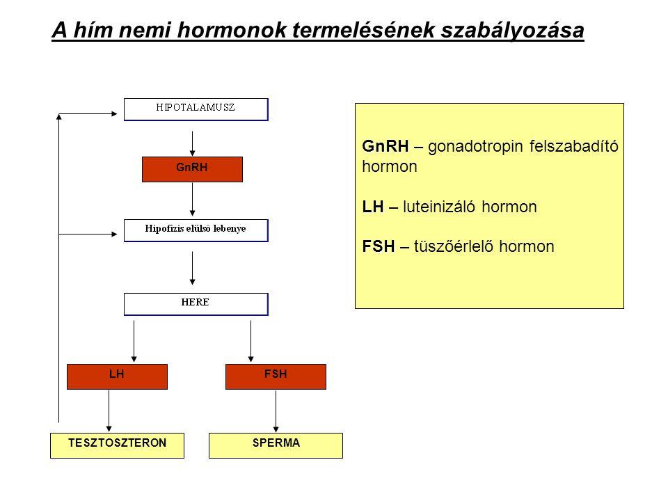 A hím nemi hormonok termelésének szabályozása