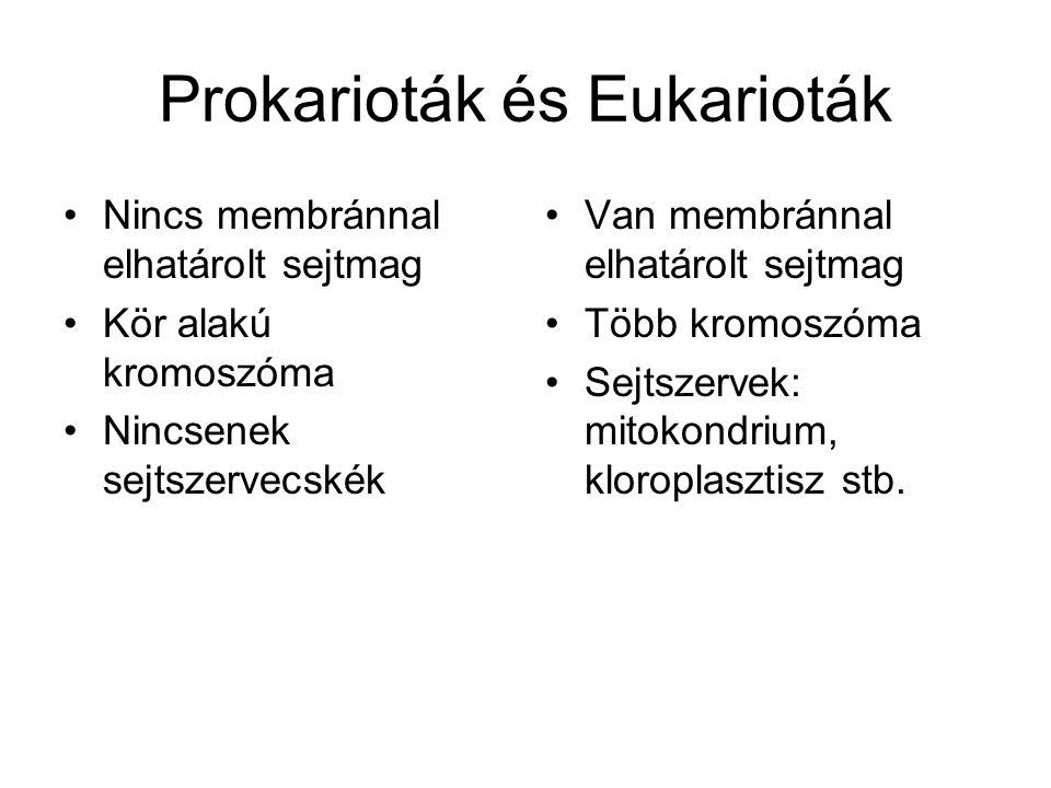 Prokarioták és Eukarioták