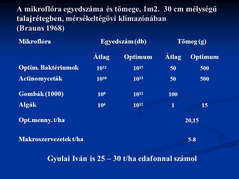 Gyulai Iván is 25 – 30 t/ha edafonnal számol