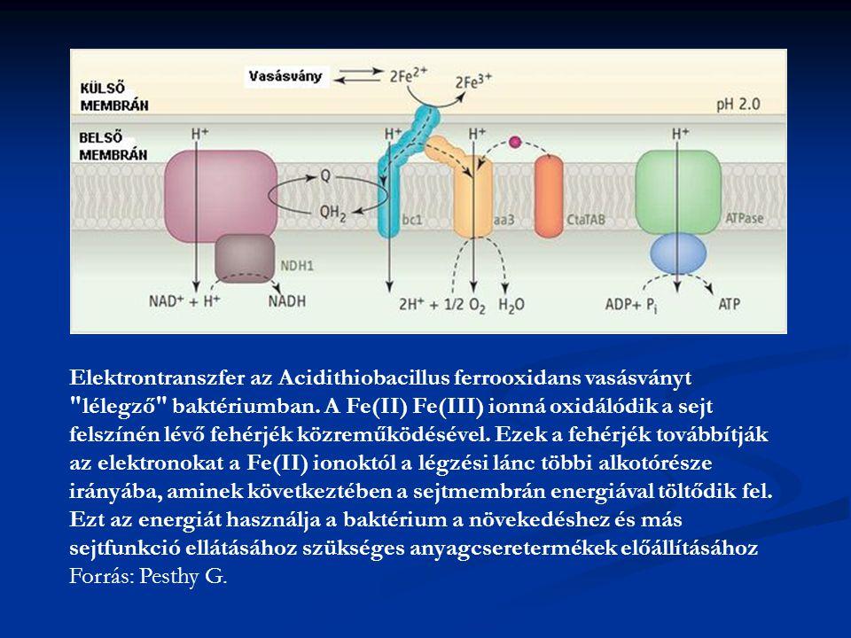 Elektrontranszfer az Acidithiobacillus ferrooxidans vasásványt lélegző baktériumban. A Fe(II) Fe(III) ionná oxidálódik a sejt felszínén lévő fehérjék közreműködésével. Ezek a fehérjék továbbítják az elektronokat a Fe(II) ionoktól a légzési lánc többi alkotórésze irányába, aminek következtében a sejtmembrán energiával töltődik fel. Ezt az energiát használja a baktérium a növekedéshez és más sejtfunkció ellátásához szükséges anyagcseretermékek előállításához