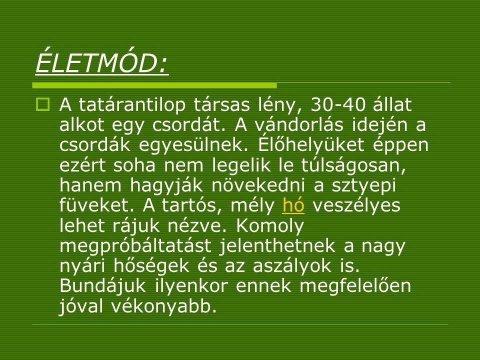 ÉLETMÓD: