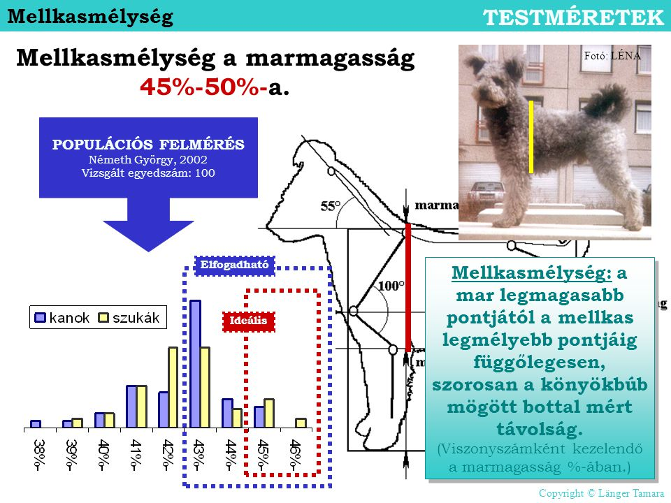 Mellkasmélység a marmagasság 45%-50%-a.
