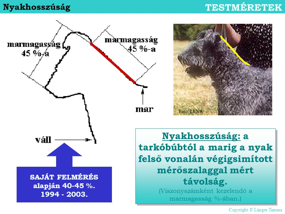 SAJÁT FELMÉRÉS alapján 40-45 %. 1994 - 2003.