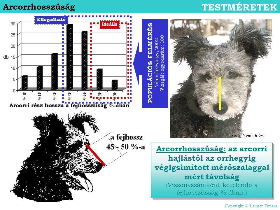 POPULÁCIÓS FELMÉRÉS Németh György, 2002 Vizsgált egyedszám: 100