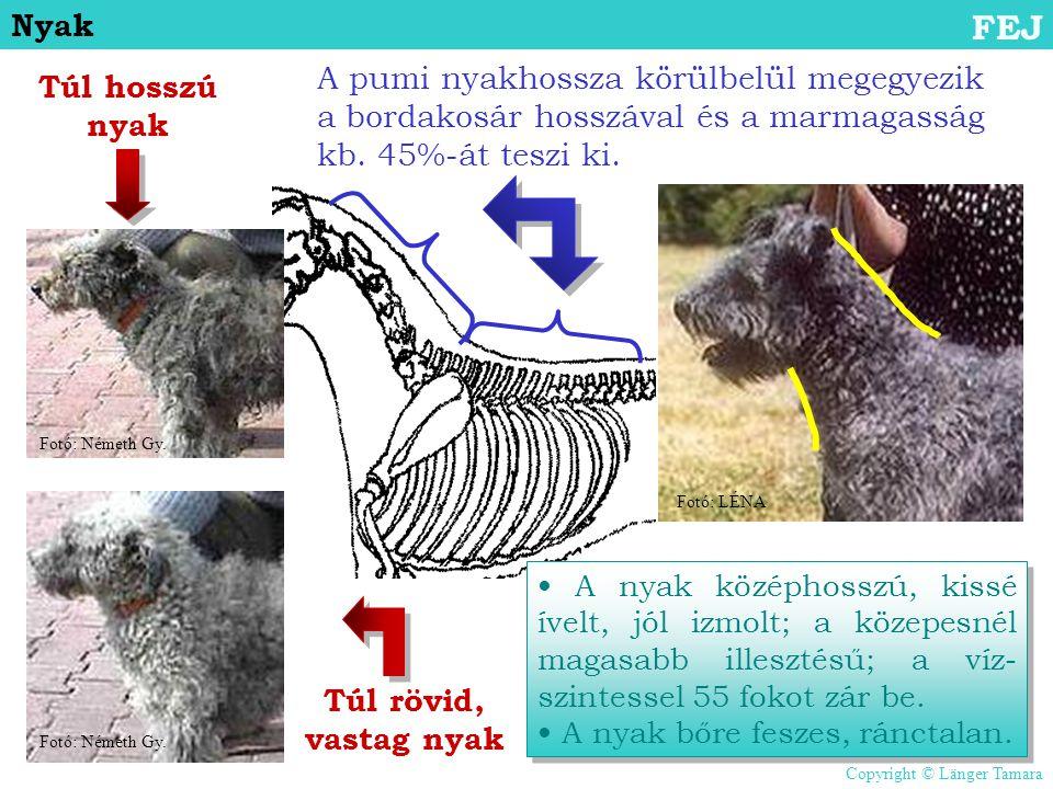Nyak FEJ. A pumi nyakhossza körülbelül megegyezik a bordakosár hosszával és a marmagasság kb. 45%-át teszi ki.