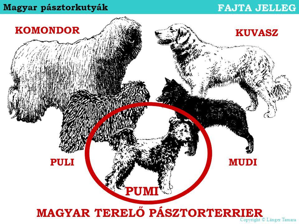MAGYAR TERELŐ PÁSZTORTERRIER