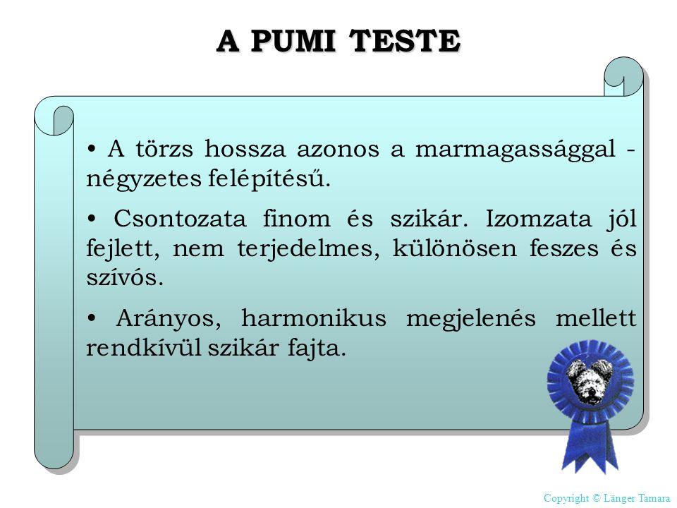 A PUMI TESTE • A törzs hossza azonos a marmagassággal - négyzetes felépítésű.