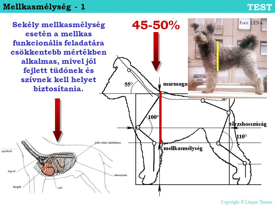 45-50% TEST Mellkasmélység - 1