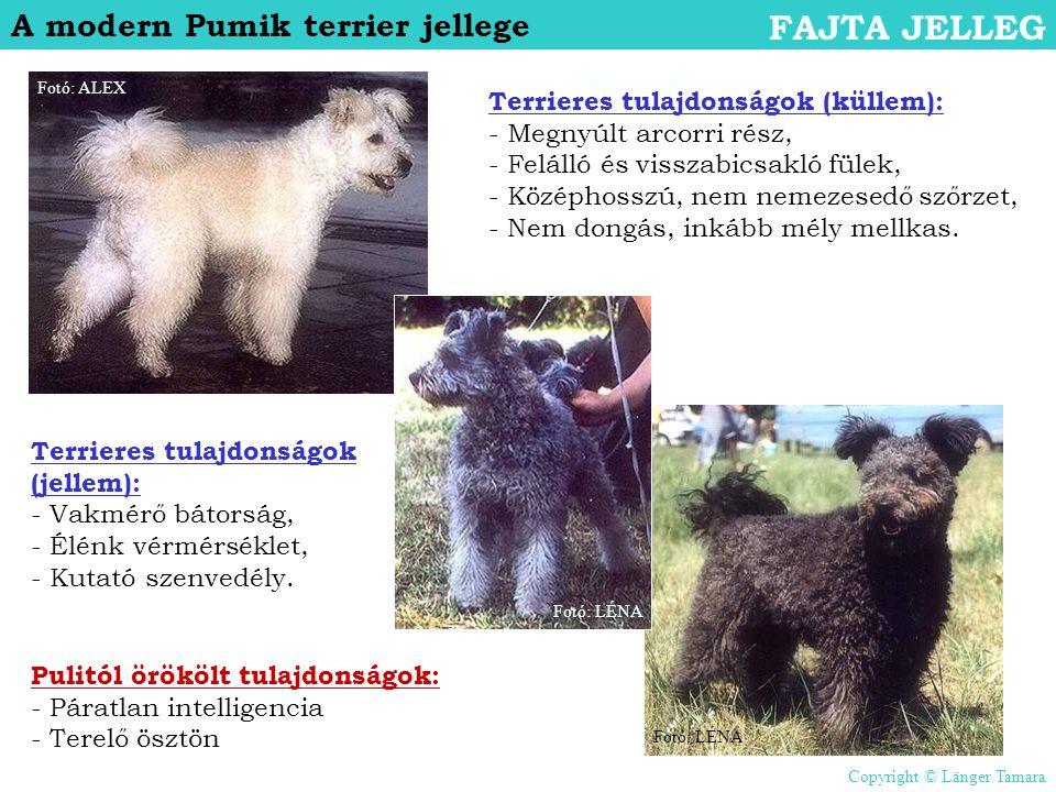 FAJTA JELLEG A modern Pumik terrier jellege