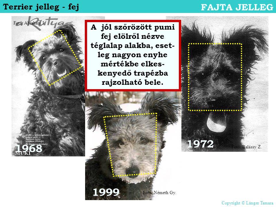 1972 1968 1999 FAJTA JELLEG Terrier jelleg - fej
