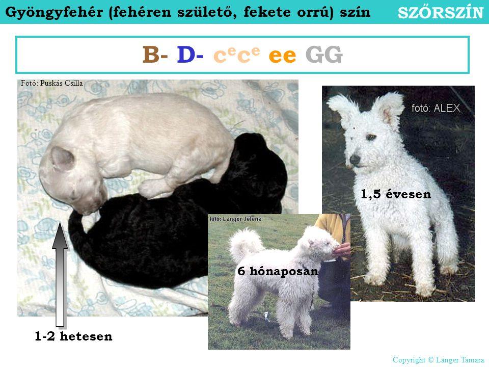 B- D- cece ee GG SZŐRSZÍN