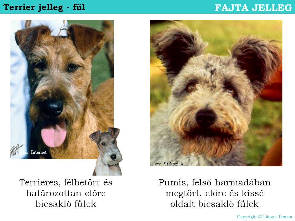 FAJTA JELLEG Terrier jelleg - fül