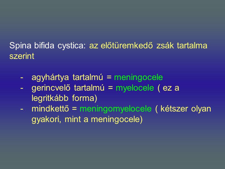 Spina bifida cystica: az előtüremkedő zsák tartalma szerint