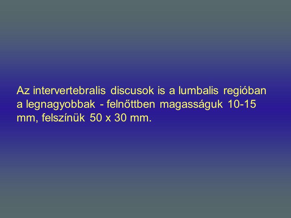 Az intervertebralis discusok is a lumbalis regióban a legnagyobbak - felnőttben magasságuk 10-15 mm, felszínük 50 x 30 mm.