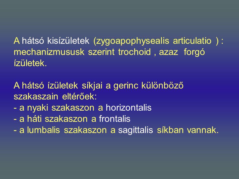 A hátsó kisízületek (zygoapophysealis articulatio ) :