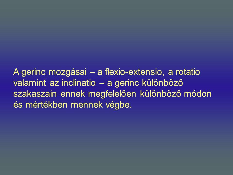 A gerinc mozgásai – a flexio-extensio, a rotatio valamint az inclinatio – a gerinc különböző szakaszain ennek megfelelően különböző módon és mértékben mennek végbe.
