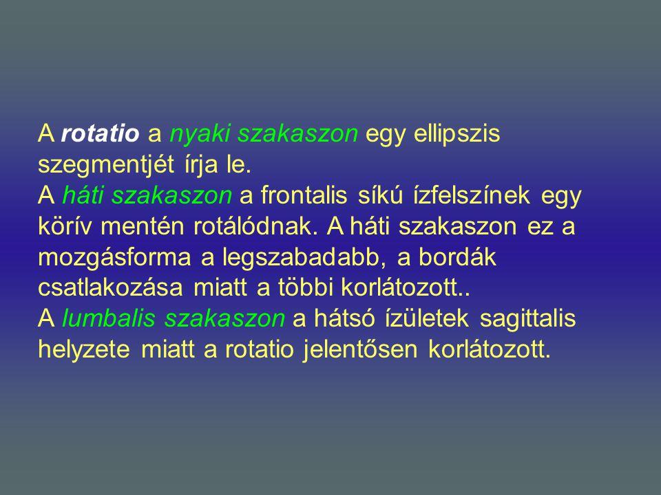 A rotatio a nyaki szakaszon egy ellipszis szegmentjét írja le.