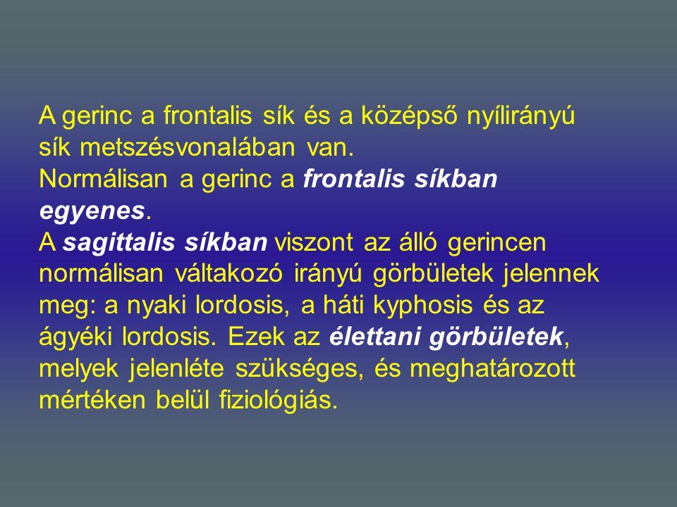 A gerinc a frontalis sík és a középső nyílirányú sík metszésvonalában van.