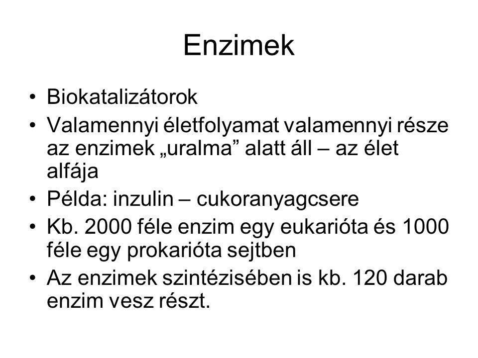 Enzimek Biokatalizátorok