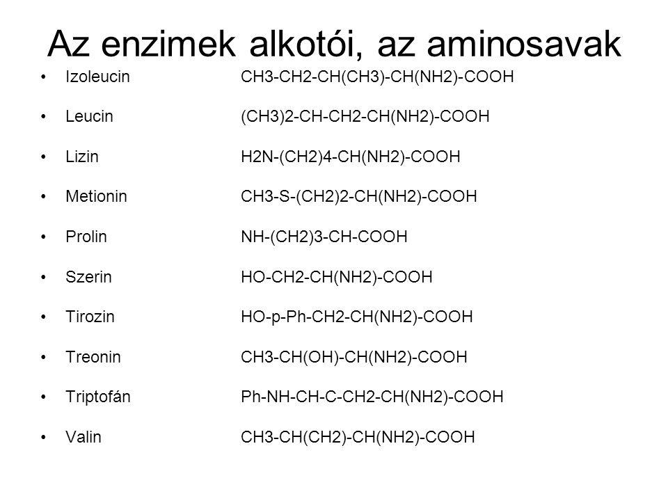 Az enzimek alkotói, az aminosavak