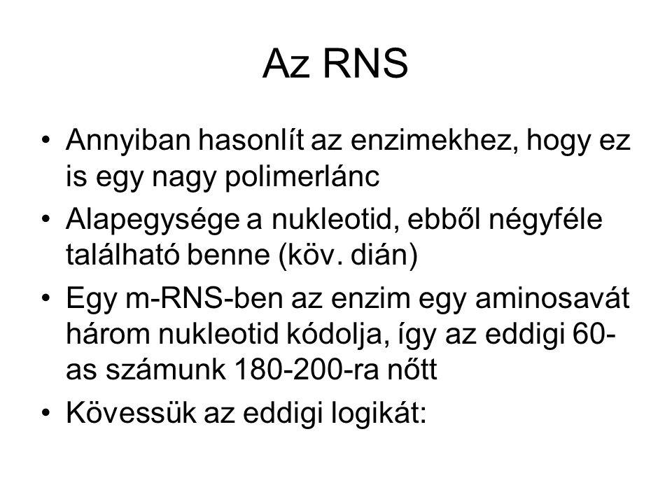 Az RNS Annyiban hasonlít az enzimekhez, hogy ez is egy nagy polimerlánc. Alapegysége a nukleotid, ebből négyféle található benne (köv. dián)