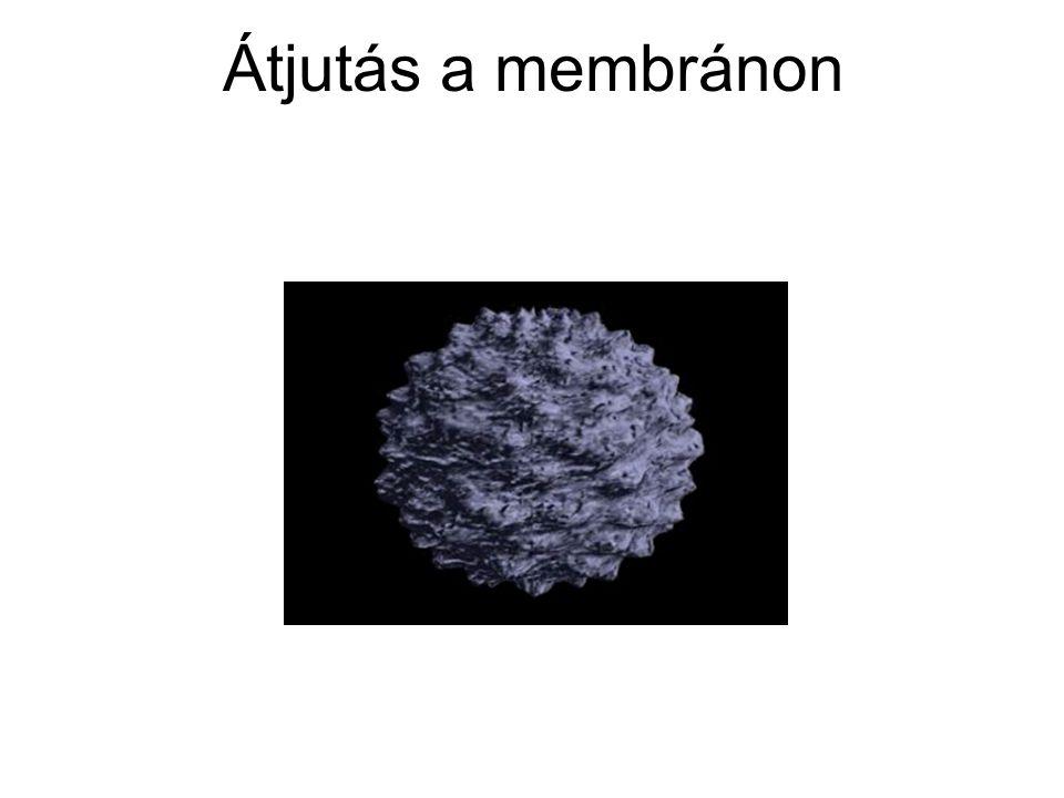 Átjutás a membránon