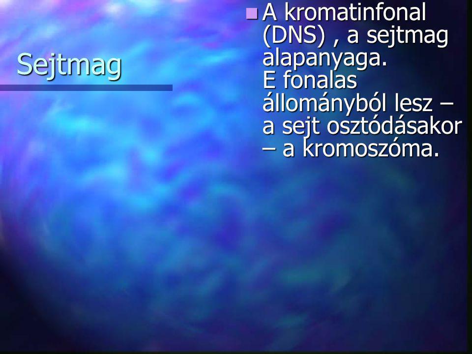 A kromatinfonal (DNS) , a sejtmag alapanyaga