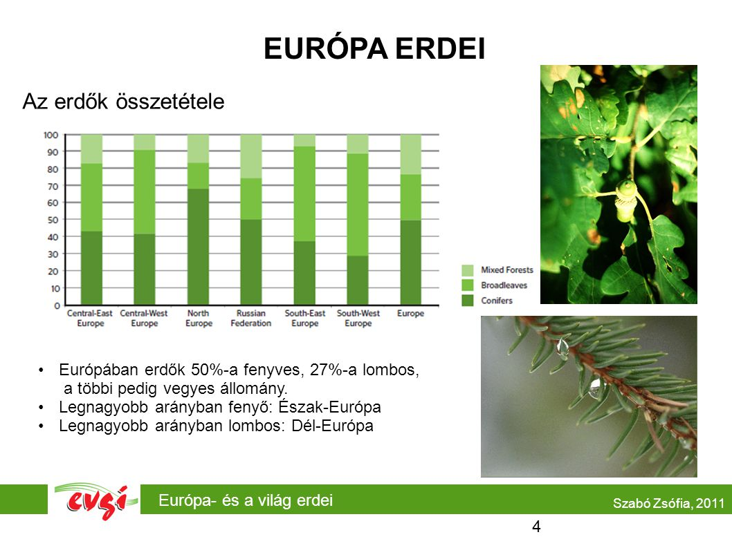 EURÓPA ERDEI Az erdők összetétele