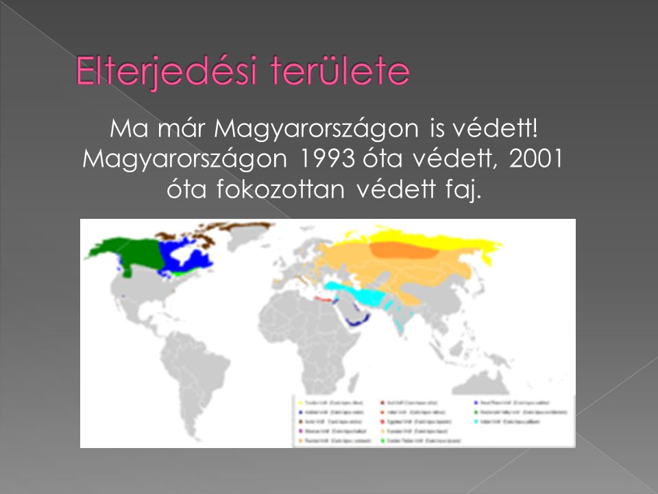 Elterjedési területe Ma már Magyarországon is védett!