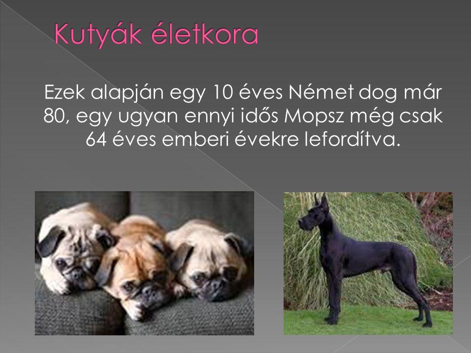 Kutyák életkora Ezek alapján egy 10 éves Német dog már 80, egy ugyan ennyi idős Mopsz még csak 64 éves emberi évekre lefordítva.