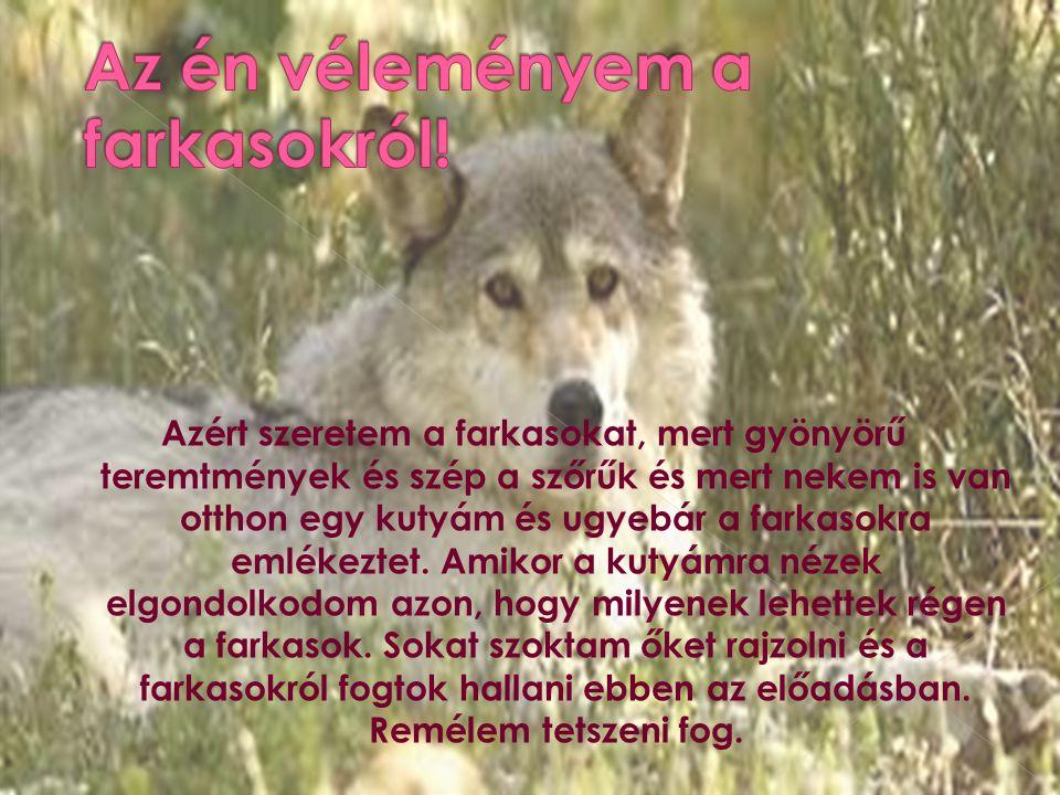 Az én véleményem a farkasokról!