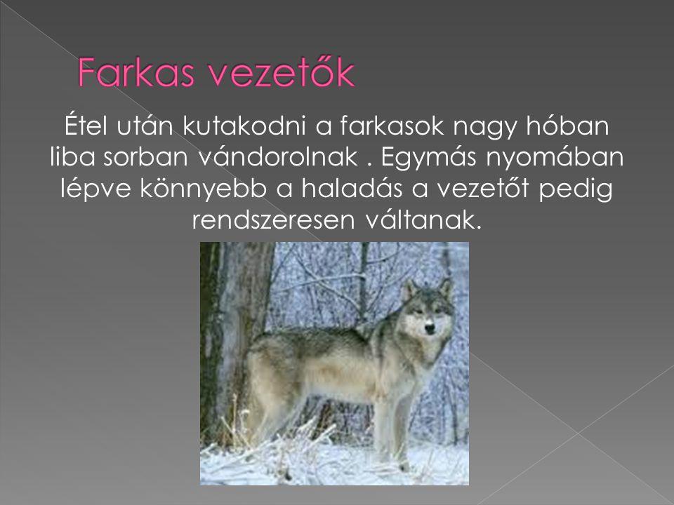 Farkas vezetők