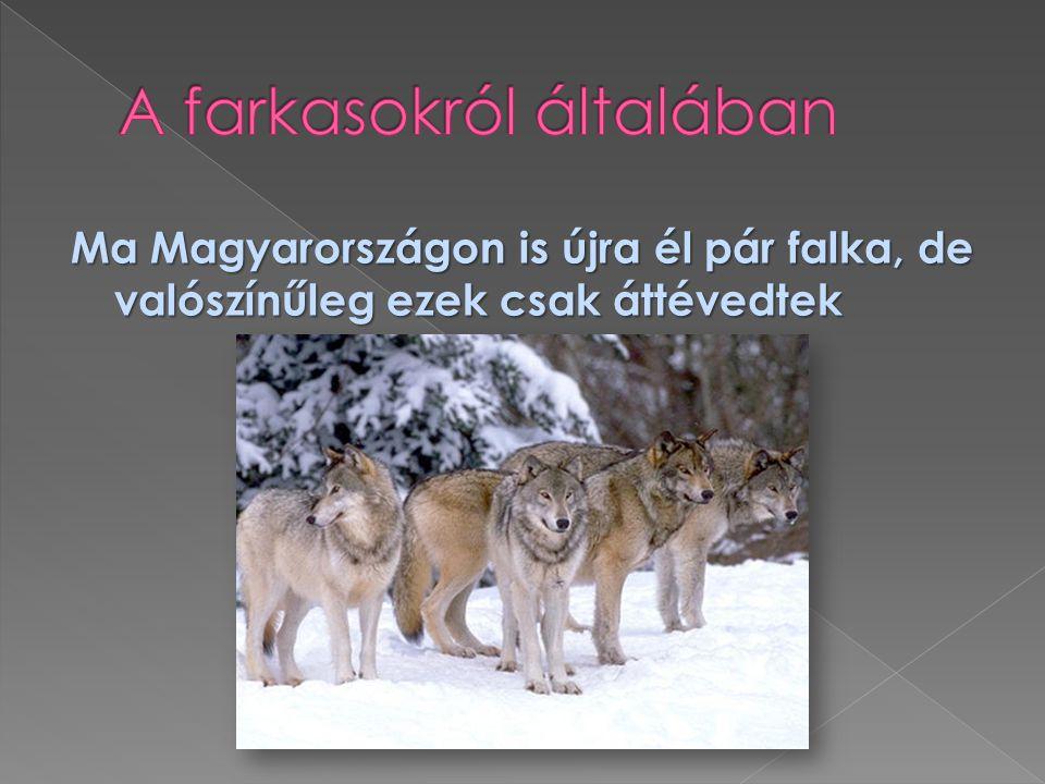 A farkasokról általában