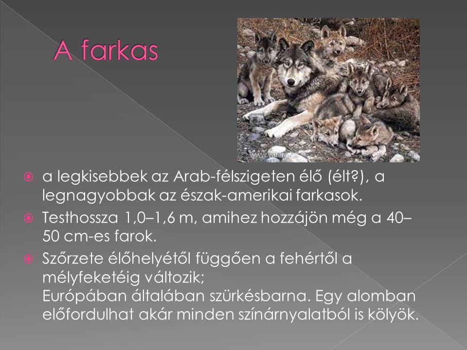 A farkas a legkisebbek az Arab-félszigeten élő (élt ), a legnagyobbak az észak-amerikai farkasok.