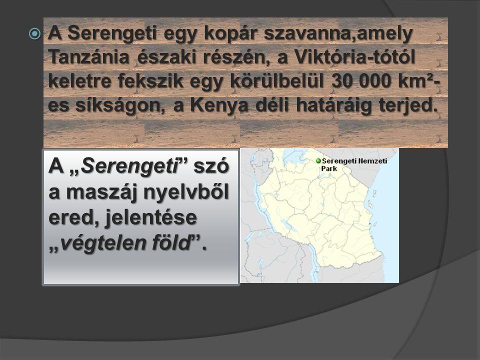 """A """"Serengeti szó a maszáj nyelvből ered, jelentése """"végtelen föld ."""