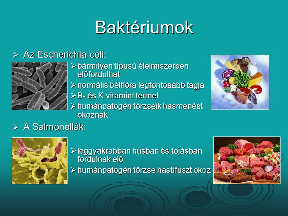 Baktériumok Az Escherichia coli: A Salmonellák: