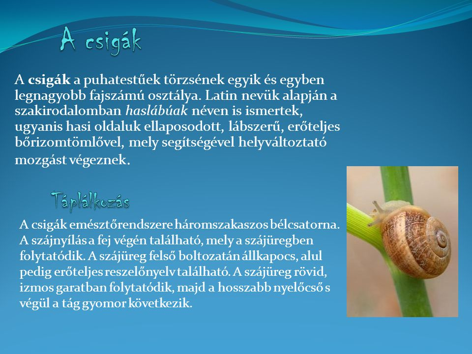 A csigák a puhatestűek törzsének egyik és egyben legnagyobb fajszámú osztálya. Latin nevük alapján a szakirodalomban haslábúak néven is ismertek, ugyanis hasi oldaluk ellaposodott, lábszerű, erőteljes bőrizomtömlővel, mely segítségével helyváltoztató mozgást végeznek.