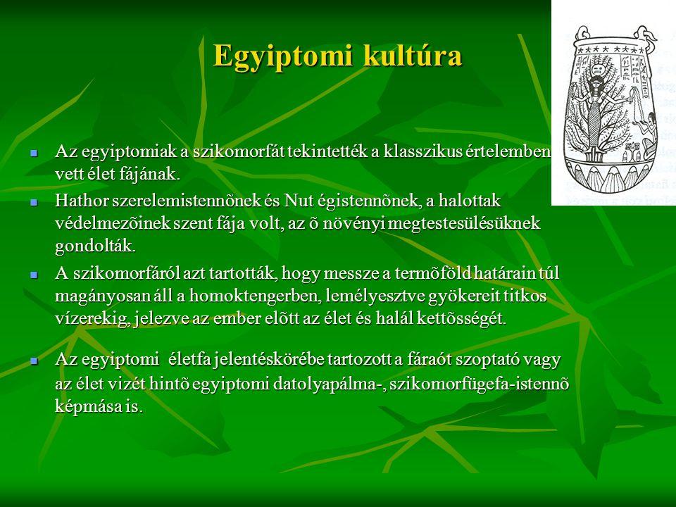 Egyiptomi kultúra Az egyiptomiak a szikomorfát tekintették a klasszikus értelemben vett élet fájának.