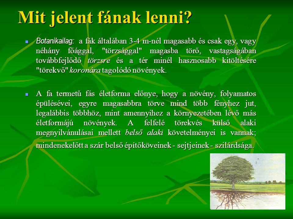 Mit jelent fának lenni