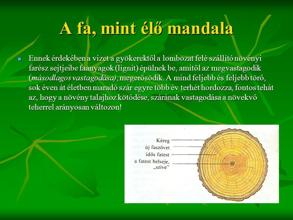 A fa, mint élő mandala