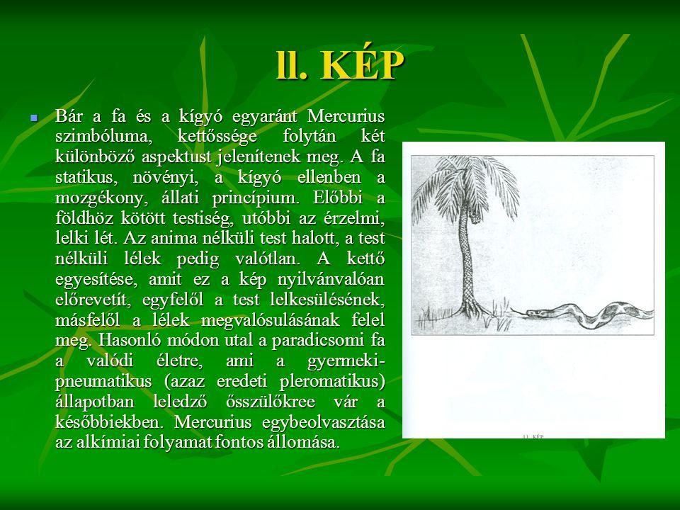 ll. KÉP