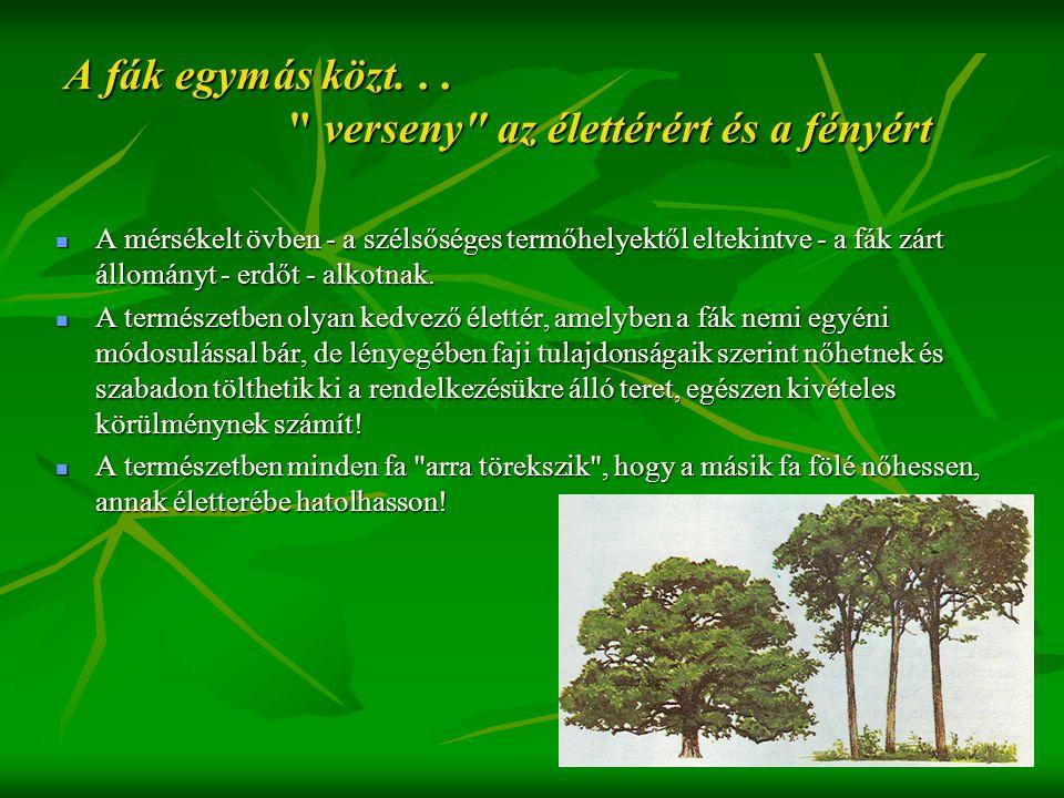A fák egymás közt. . . verseny az élettérért és a fényért